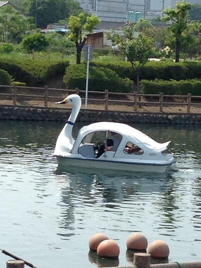 念願の白鳥ボート